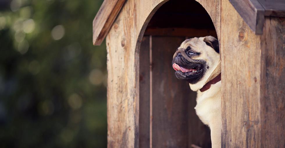 Why kennel buyers should offer luxury pet products and services