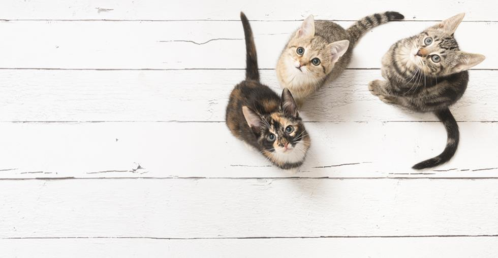 how-to-buy-cattery-hero