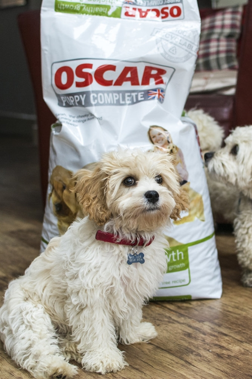 pet food home delivery - 8