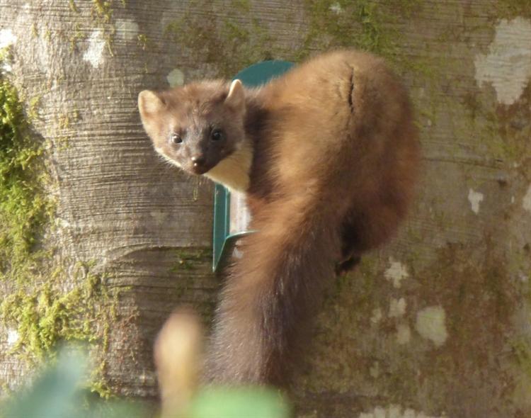 glenloy wildlife lodge for - 11