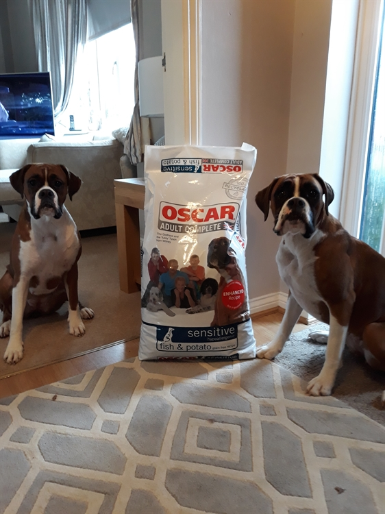 pet food home delivery - 12
