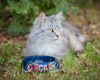 pet food home delivery - 3