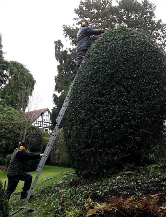 grounds maintenance landscaping business - 6