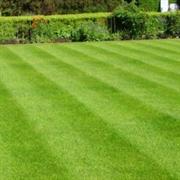 established greenthumb franchise nottinghamshire - 1