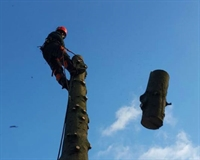 independent tree surgery business - 1